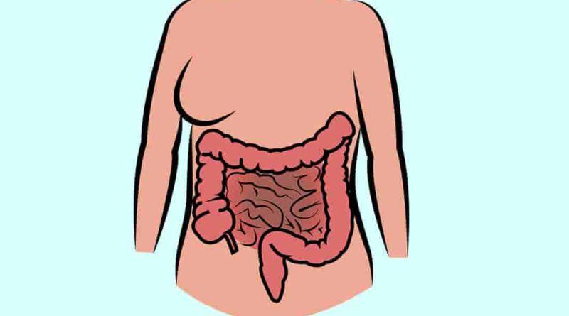 intestine facts
