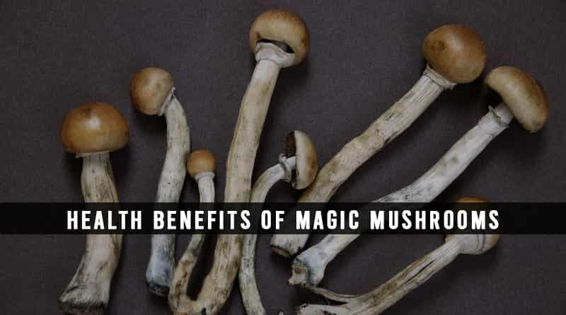 Benefits of Magic Mushrooms